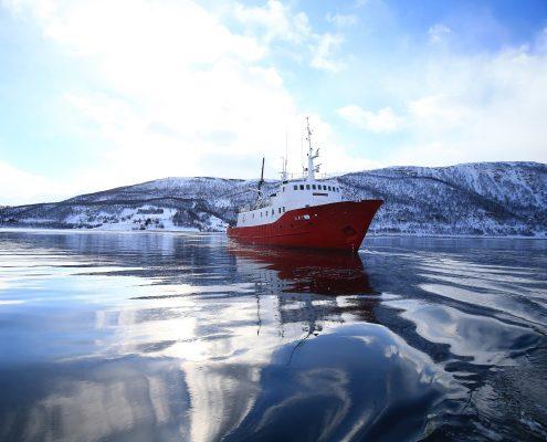 Die Polargirl