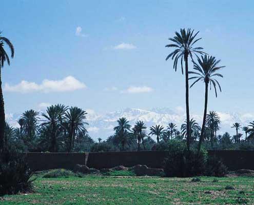 Palmen und Schnee in Marokko
